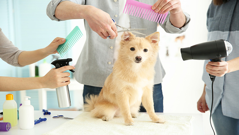 My Pet Spa Dog and Cat Grooming At Door Step