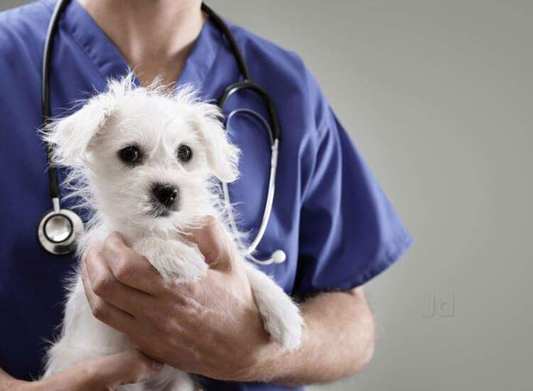 Pets Veterinary Clinics